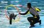 نت برگ آنی: آخرین فرصت برای دلفیناریوم برج میلاد