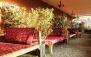 رستوران چایباغ زیتون با منوی باز غذاهای لذیذ