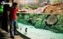 بازدید از بزرگترین تونل آکواریوم ایران در انزلی