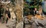 آتلیه حیات وحش کاراکال