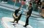 نمایش شیرهای دریایی در دلفیناریوم