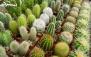 آموزش تولید گیاهان زینتی ، کاکتوس و کشت بافت