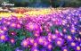 بازدید باغ گیاه شناسی در فصل بهار