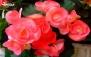 بن خرید گل های تزئینی از مرکز گل و گیاه پایا