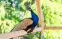 3 عدد بلیط ورودی باغ پرندگان + خرید چای آش رشته