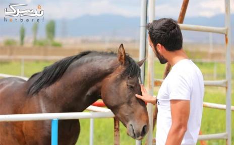 سوارکاری در اسب سواری آراد