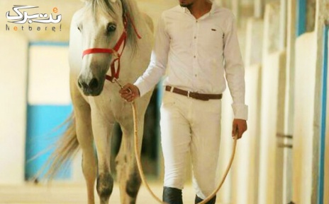 بیلیارد در اسب سواری آراد
