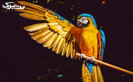 باغ پرندگان شنبه11 تا سه شنبه 14مرداد