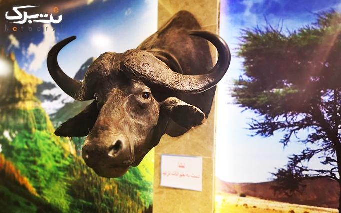 موزه حیات وحش چالیدره