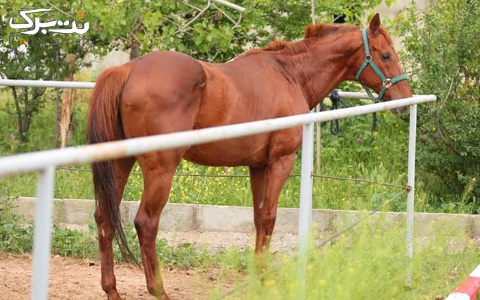 سوارکاری و بیلیارد در اسب سواری آراد