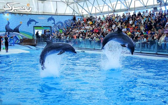 پارک دلفین کیش با آژانس ایرانیان آتا کیش