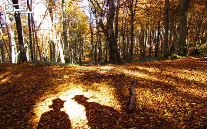 برگ ریزان پاییز در جنگل رویایی الیمستان