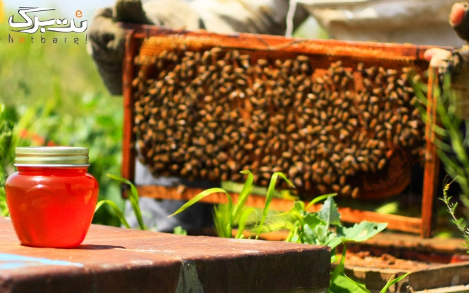 بن خرید عسل از فروشگاه هانیلی
