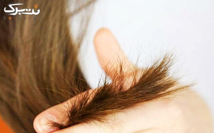 موخوره گیری مو  در آرایشگاه کالاورس