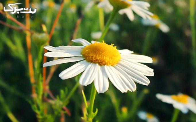 فیلم آموزشی تور مجازی گیاهان دارویی از گیاه دانه