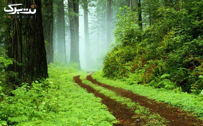 تور یکروزه جنگل پاییزی الیمستان از آژانس بامداد پر