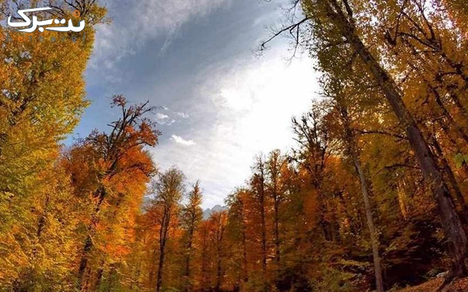توریکروزه جنگل پاییزی الیمستان سفرهای دور و نزدیک