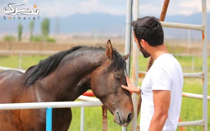 سوارکاری در اسب سواری آراد تجربه ای به یاد ماندنی