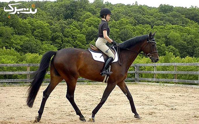 اسب سواری تفریحی در باشگاه سوارکاری یال