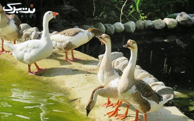 ورودی بازدید از باغ پرندگان