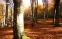 خاطره ای سین دوازدهم در جنگل الیمستان با ژیوار