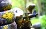 نت برگ آنی: پینت بال Forest با طراحی و چیدمان جدید