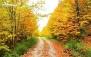 تور جنگل راش با آژانس گردشگری دنیای دیگر پارس