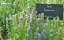 باغ گیاهشناسی دارویی فیروزه