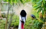بلیت ورودی بزرگ ترین باغ پرندگان خاورمیانه