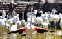 آفریقا، آمریکا و تمام دنیا در بهشت پرندگان