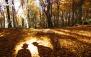 یک روز رویایی در جنگل زیبای الیمستان با 20 گشت
